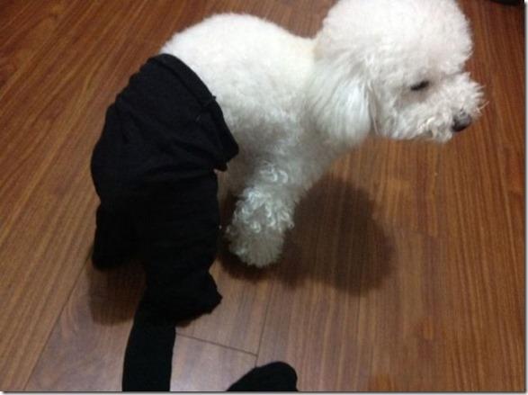 dogs-pantyhose-1