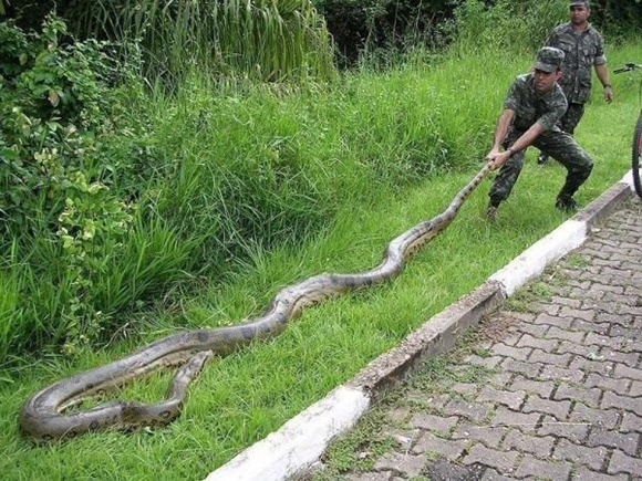 Anaconda.img_assist_custom-600x450