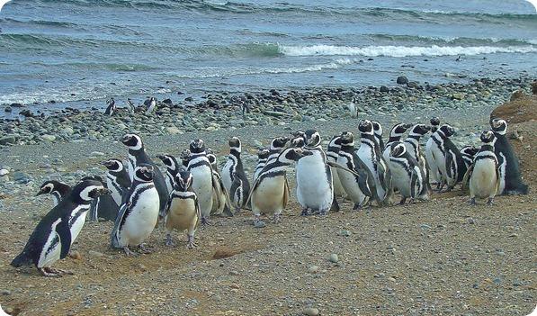 Reunião dos pinguins