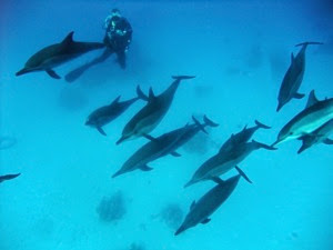Dolphin Surround