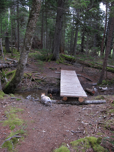 Well actually, Sharkey, it's a little wooden bridge over, what looks like a vernal pool.  These are temporary pools that form in the spring and support all kinds of wildlife, such as frogs, toads, and salamanders.  Let's look for some!