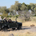 Vumbura Camp, Pirschfahrt © Foto: Ulrike Pârvu   Outback Africa Erlebnisreisen