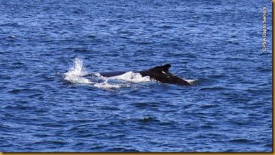 141030 106 Eden Whale Watching