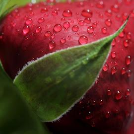 by Md Mamunur Rahman - Abstract Water Drops & Splashes