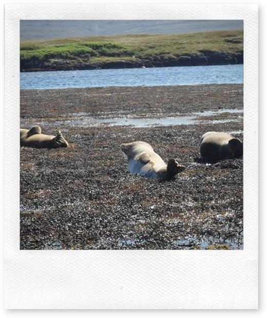 Sealscolony