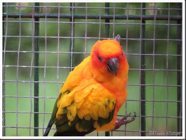 colorful parrot 3
