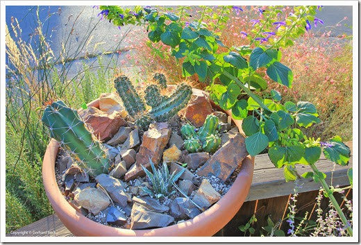 131027_pots-on-front-yard-fence_08