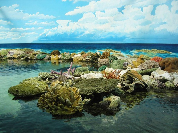 Great Barrier Reef in Queensland, Australia