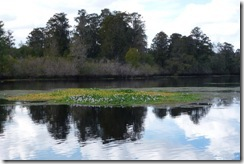 Lettuce Lake Park in Tampa