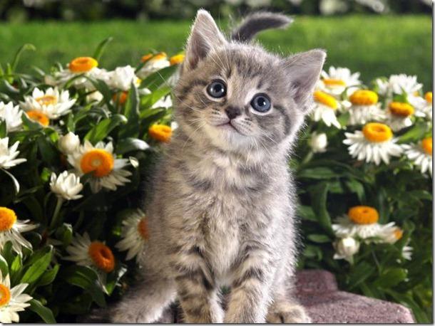 funny-animals-cute-18
