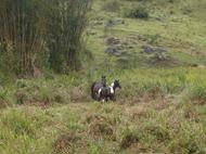 Dogs Trekking 4 (286)