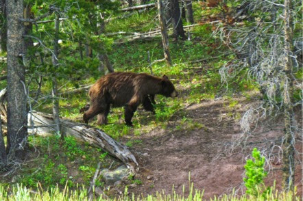 BearSighting-4-2014-07-30-21-17.jpg