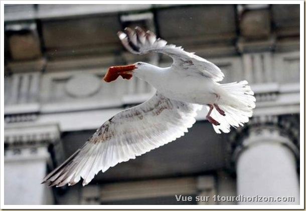 Le vol des mouettes-5