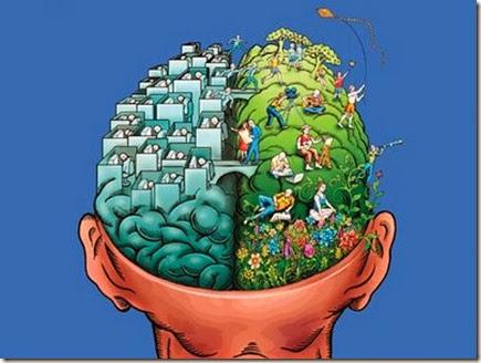 cerebro direito