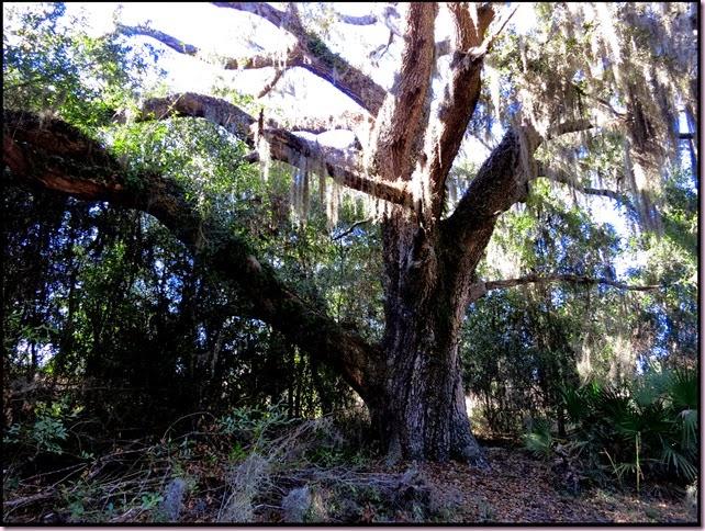 treeIMG_2197