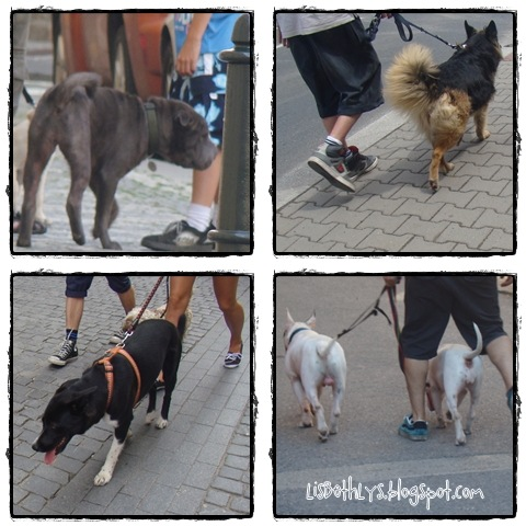 Hunde i Prags gader.