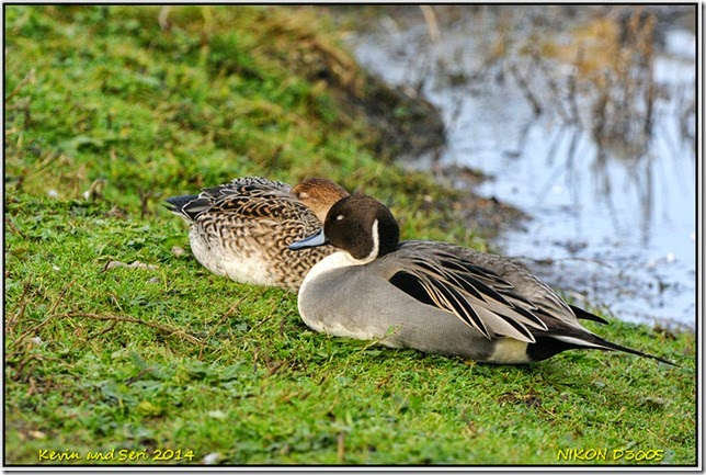 Slimbridge WWT - Autumnal scenes