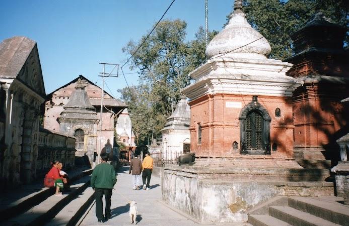 Obiective turistice Nepal: cu iedul la plimbare.jpg