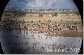 Whitewater Draw Wildlife Area and Lowell, AZ 012