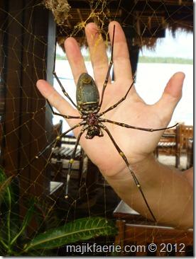 40 spider