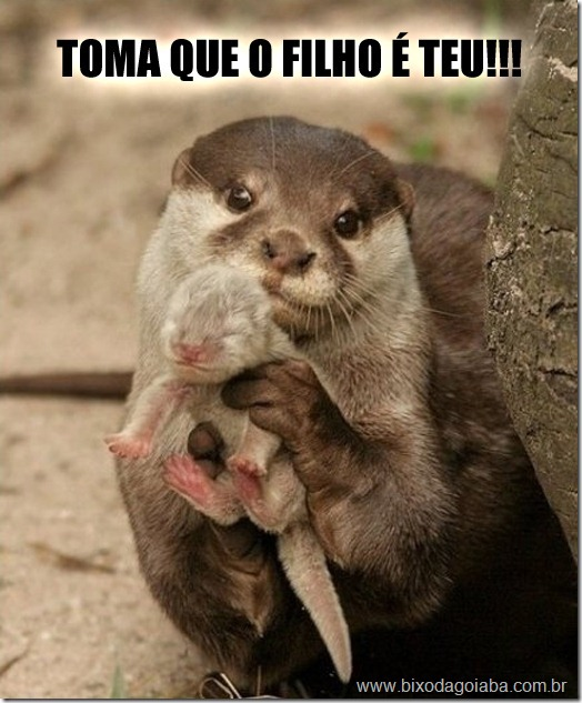 mamae-lontra-mostra-filhote