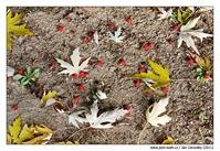 Listí...