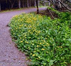 Quoddy Path w flowersMSB_8485-Edit NIKON D300S July 03, 2011