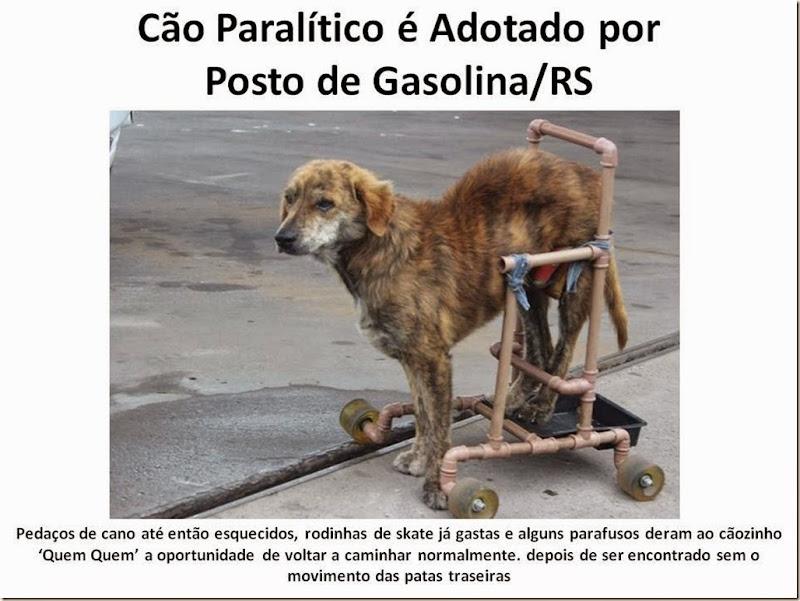 Cão Paralítico é Adotado por