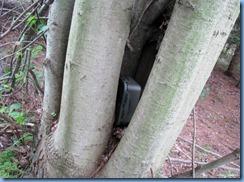 4989 Laurel Creek Conservation Area - found the Septomaple Geocache