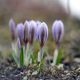 by Pavel Klučar - Nature Up Close Other plants