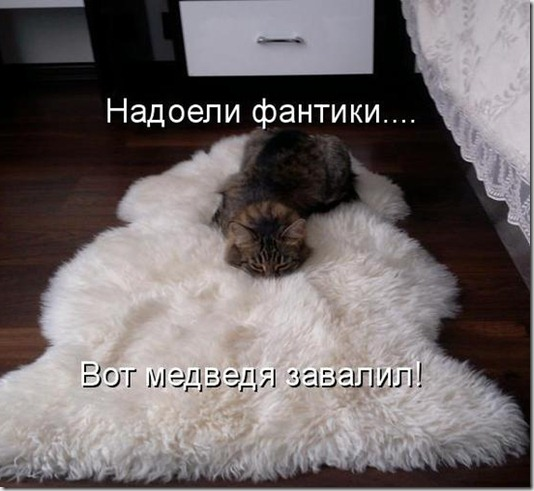 89305583_kotomatritsa_MF
