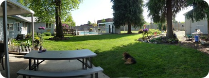 backyard panorama1
