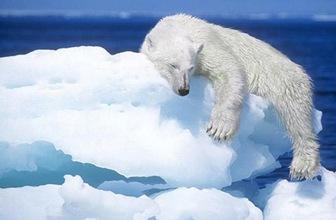 cambio-climatico-Especies-en-extinción