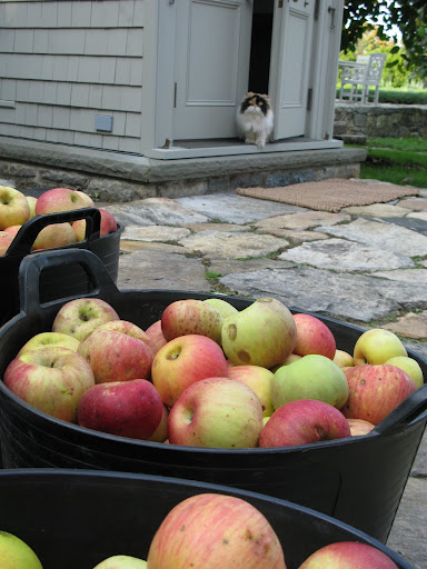 Say, Princess Peony - do you want to help us make apple cider?