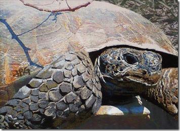 Gaskins_tortoise