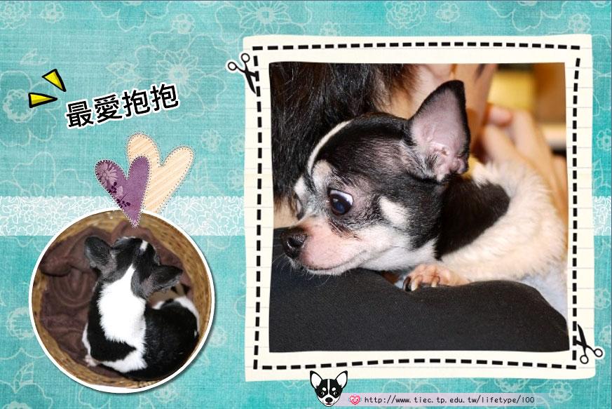 201007minibook-dog03.jpg