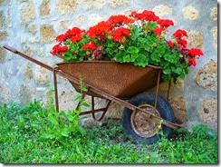 flores vermelhas no carrinho