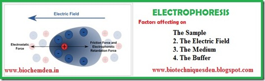 Electrophoresis factors