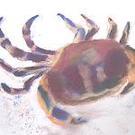 AB_crabcolours - 25.jpg