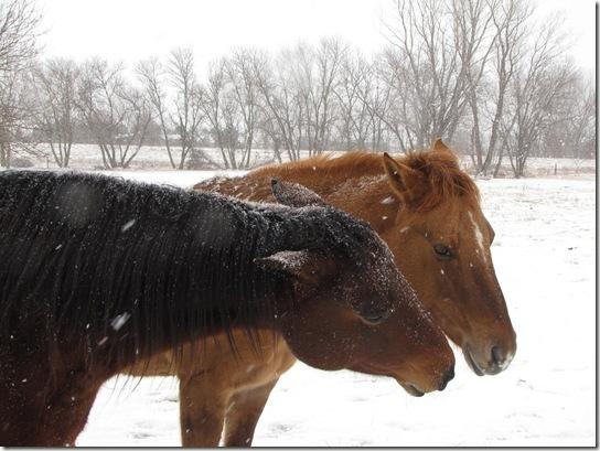 winter horses 029