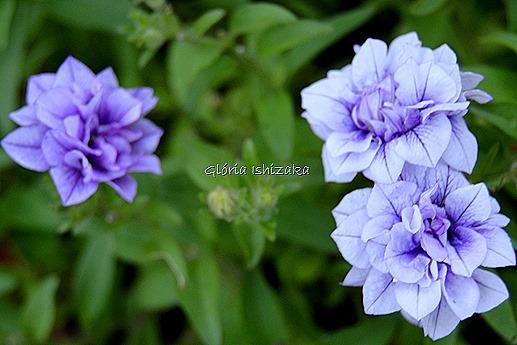 Azul - Glória Ishizaka 22