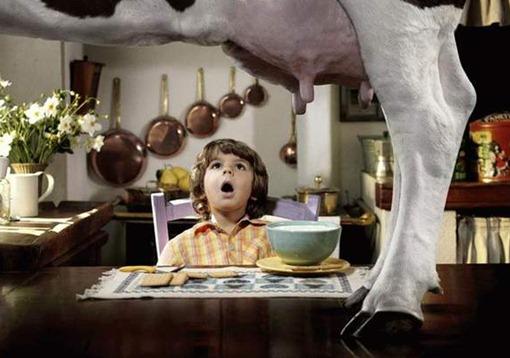 А, вот откуда молоко ко мне в кашу попадает!