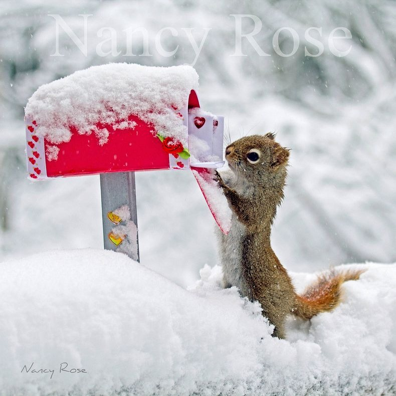 nancy-rose-squirrels-13