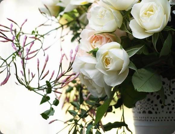 jasmine nine blooms 10176108_10151999968906712_2490359559193070849_n