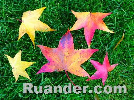 Fall Color 3 Ruander