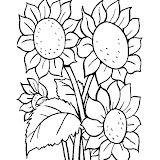 flores_21.jpg