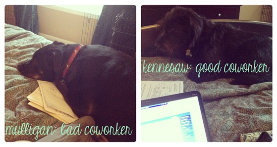 workfromhomedogs