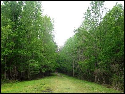 Bolen Bluff Trail-Spring Equinox 027