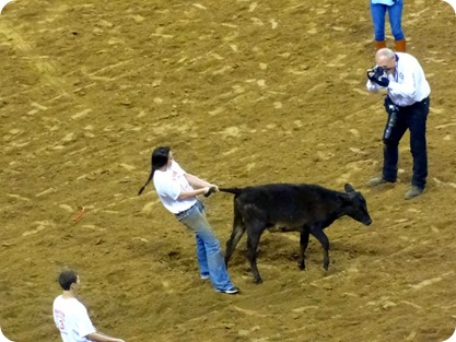 calf scramble