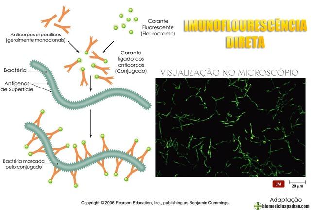 imunoflourescência direta biomedicina